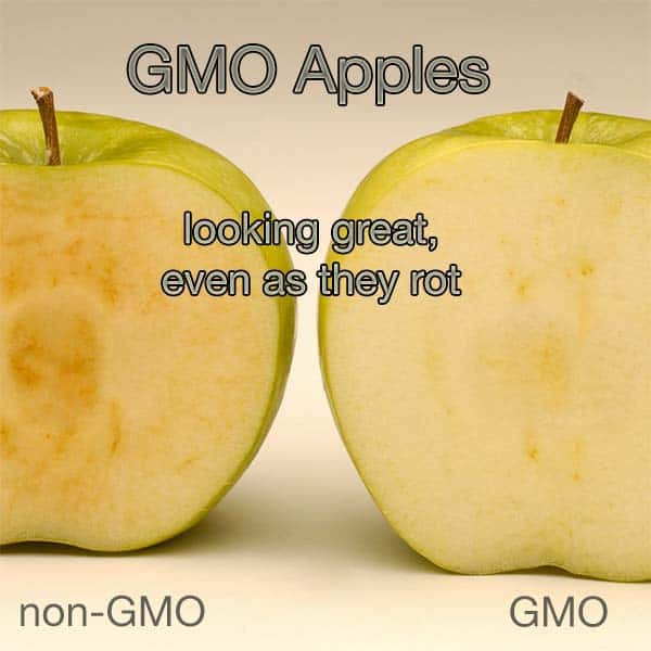 gmo2 - GMOs - WHAT ARE THEY?