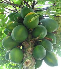 papaya - WHAT FOODS ARE GENETICALLY MODIFIED?