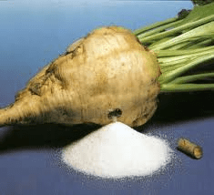 sugar beet crop - WHAT FOODS ARE GENETICALLY MODIFIED?