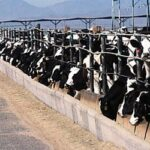 What is a Concentrated Animal Feeding Operation?