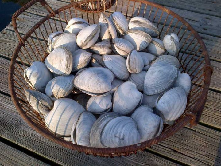 bucket of clams 720x540 - Five Star New England Clam Chowder